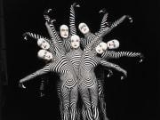 _Zebras02_Veronique Vial