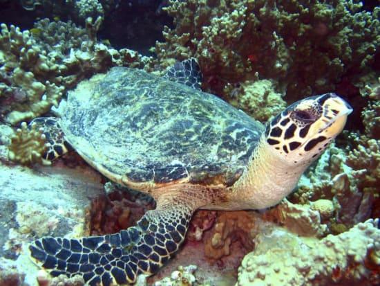 phuket diving3