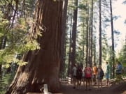 USA_California_Sequoias