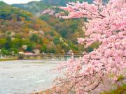 Arashiyama_Cherryblossoms