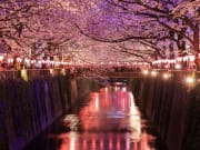 Illuminated Cherry Blossoms at Nakameguro