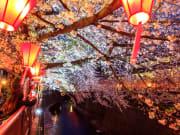 Vibrant lanterns down at Nakameguro