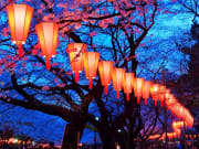 Lanterns and cherry blossoms of Nakameguro