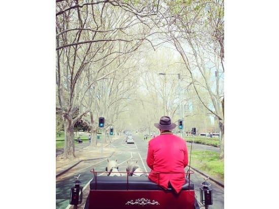 treeline st.kilda road-1