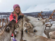 Reindeer herd encounter in Arctic Circle
