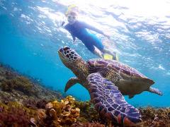 snorkel-turtles