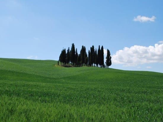 orcia_006_(2)