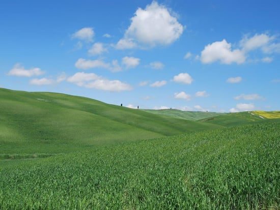 orcia_015_(2)