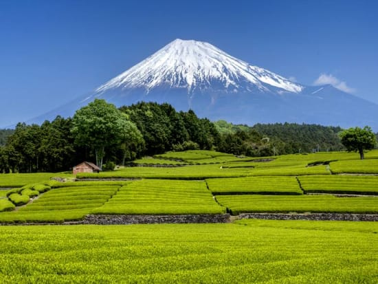 Mt Fuji Tours From Kyoto