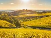 Italy, Chianti, Tuscany, vineyards
