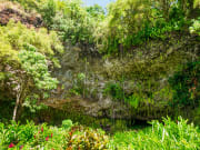 84926570_ML_fern_grotto