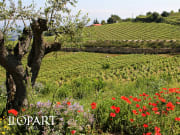 Llopart cava winery and vineyard