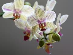 orchidea-3160369_1920