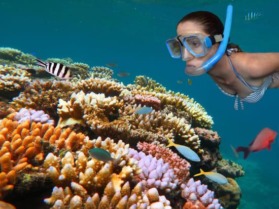 great barrier reef snorkeling australia