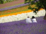 Flower field couple
