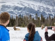 See-Elk-on-the-Discover-Banff-and-Its-Wildlife-Winter-Tour