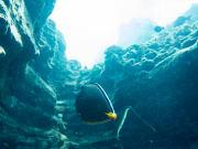 lehua snorkeling-1-3