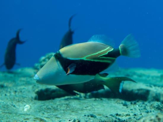 lehua snorkeling-1-6