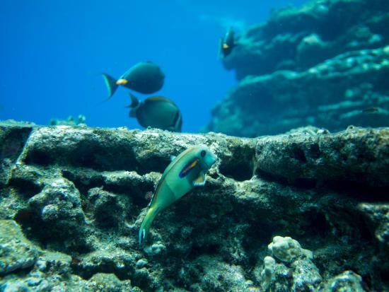 lehua snorkeling-1-7