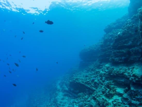 reef-1-3