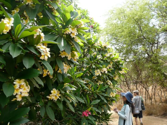 AAE_Botanical03