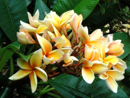 AAE_Botanical05