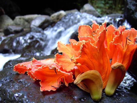 AAE_Botanical01