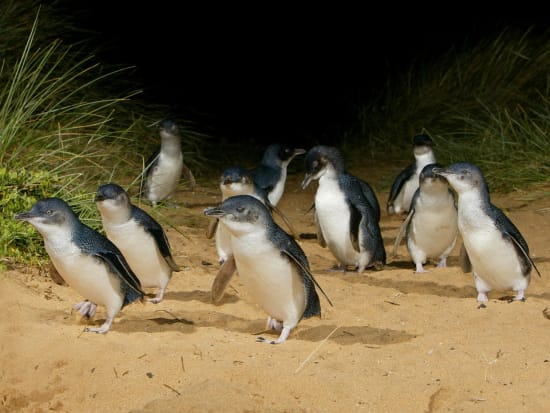Penguins with VIP Skybox Tour