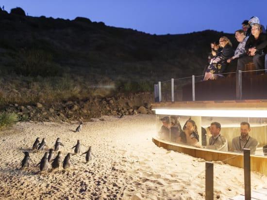 Oceania Tours Phillip Island