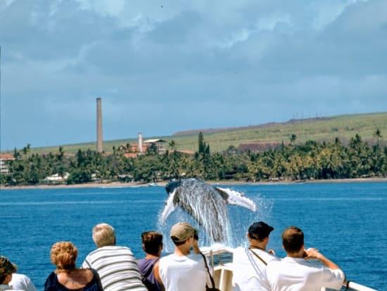 Whale-Breach-Guests