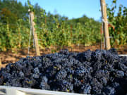 USA_Portland_Evergreen_Willamette Winery
