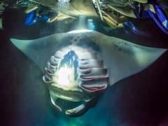 manta ray sq 3 2
