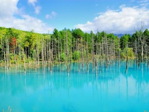 美瑛の丘・青い池