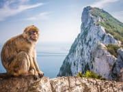 Gibraltar Rock & Macaque_shutterstock_161855363