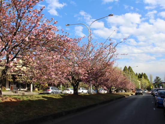Leura Springtime