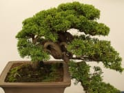 bonsai-2699894_1280