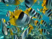 Maui Reef_shutterstock_606045245 (1)