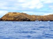 Maui Reef_20153517_M