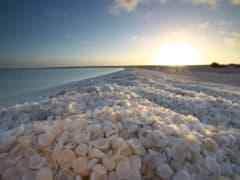 Shell-Beach-Shark-Bay
