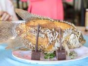 Vietnam_Elephant Ear Fish_shutterstock_632138759
