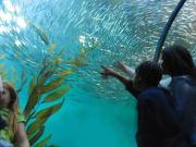 San Francisco_Aquarium of the Bay_Visitors School