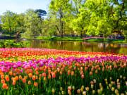 Netherlands_Keukenhof_tulips_shutterstock_428313934