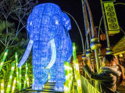blue elephant light display in vivid sydney