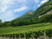 france_savoie_winery_shutterstock_695384692