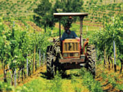 Autopia - Hunter Valley, Tractor driving through vineyard rows, Destination NSW