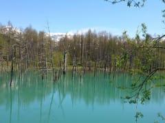 青い池5月頃