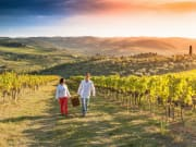 Napa Valley_Vineyards_Harvest