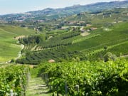 Italy_Langhe_shutterstock_1078233746