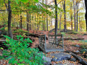 USA_New York_Bear Mountain_forest_fall foliage