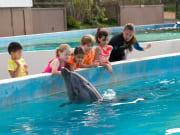 Dolphin_Aloha3-1